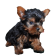 Toronto Yorkshire Terrier Puppies for Sale